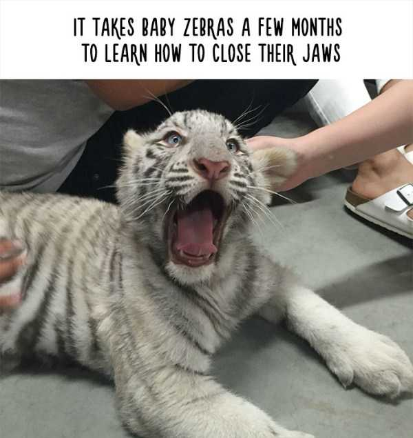 fake-facts-about-animals (3)
