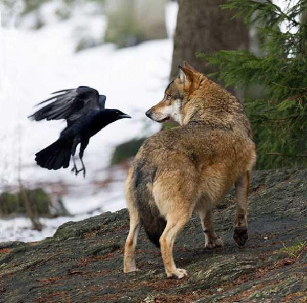 funny-crows-pics (1)