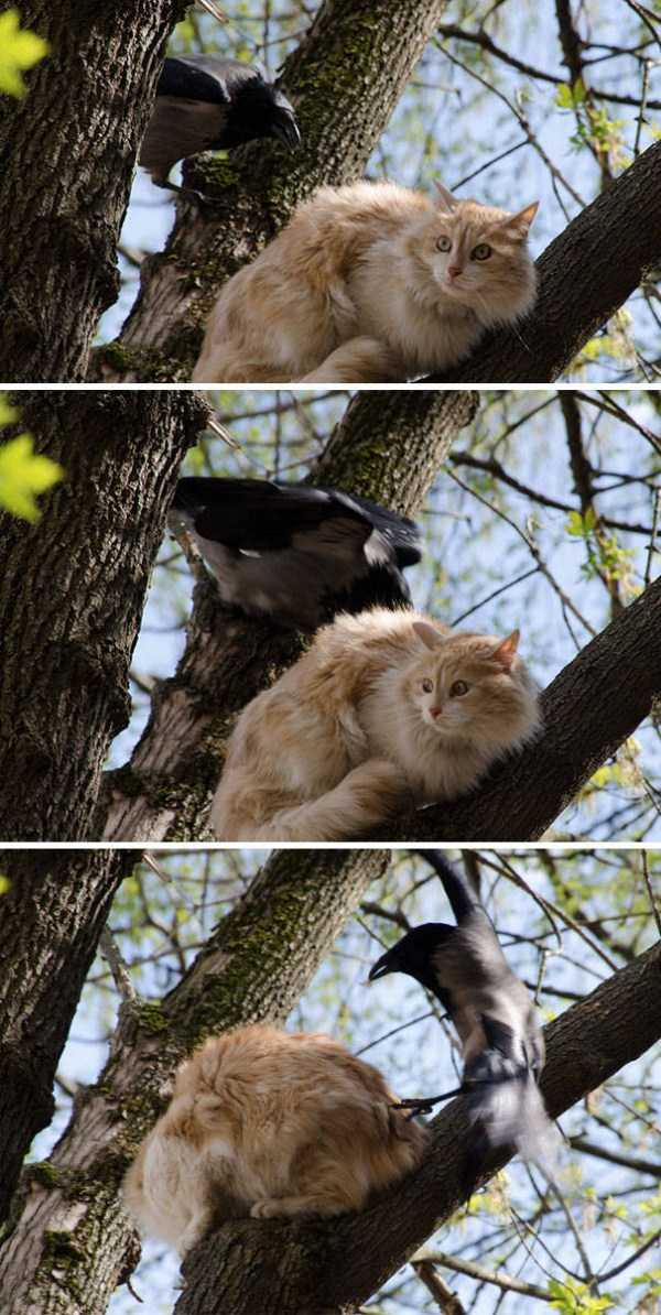 funny-crows-pics (14)