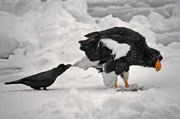 funny-crows-pics (20)