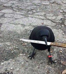 funny-crows-pics (27)