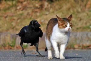funny-crows-pics (30)