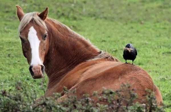funny-crows-pics (32)