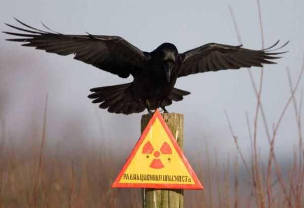 funny-crows-pics (5)