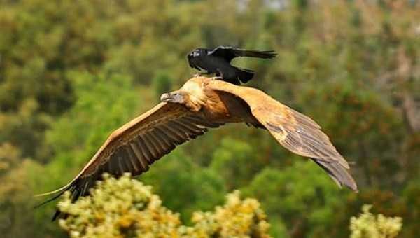 funny-crows-pics (6)
