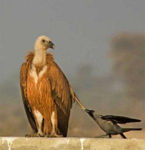 funny-crows-pics (8)