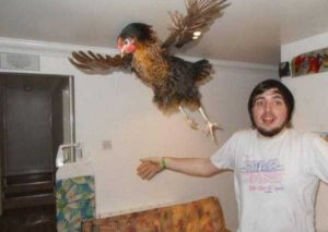 perfectly-timed-photos (12)