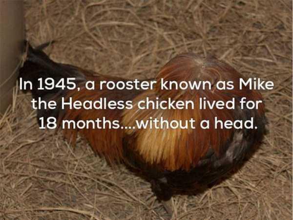 weird-facts (9)