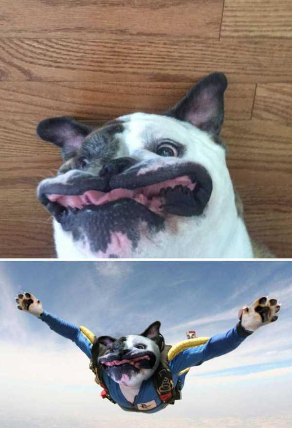 funny-photoshops (36)