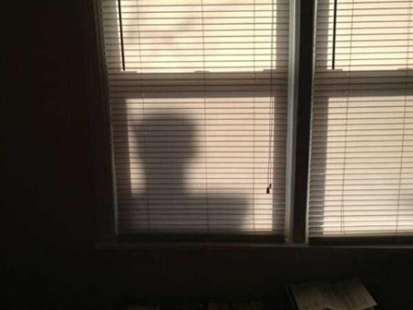 funny-shadows (2)