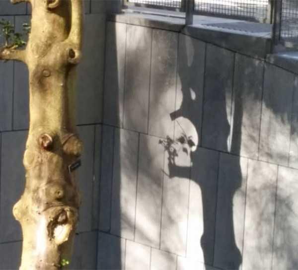 funny-shadows (28)