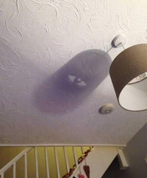 funny-shadows (35)