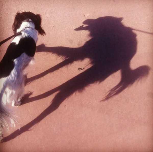 funny-shadows (37)