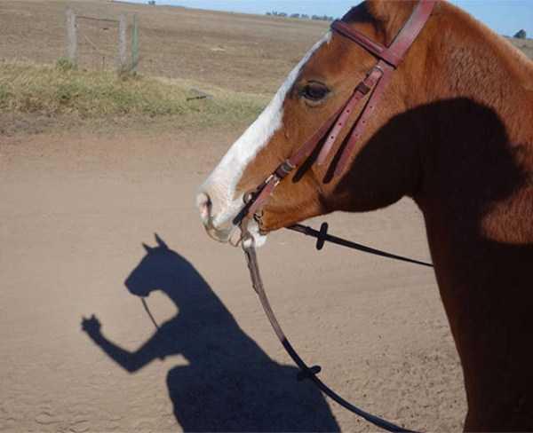 funny-shadows (50)