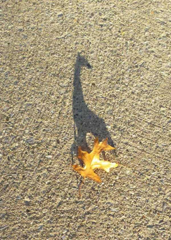 funny-shadows (57)