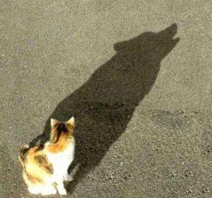 funny-shadows (61)