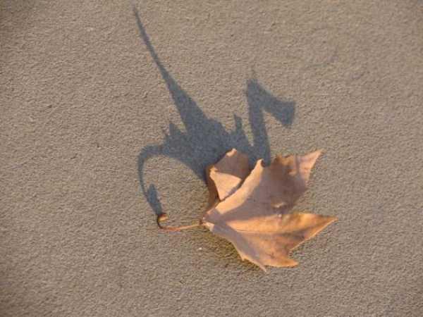 funny-shadows (8)