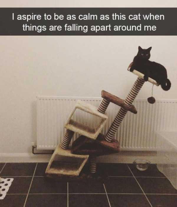 hilarious-cat-snapchats (1)