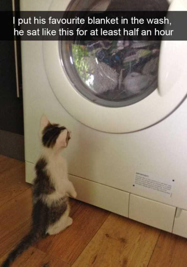 hilarious-cat-snapchats (10)