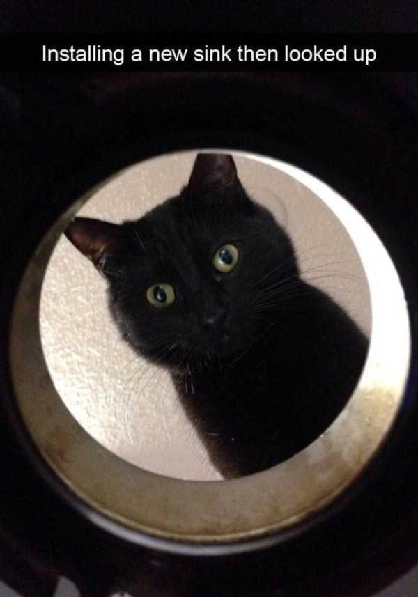 hilarious-cat-snapchats (11)