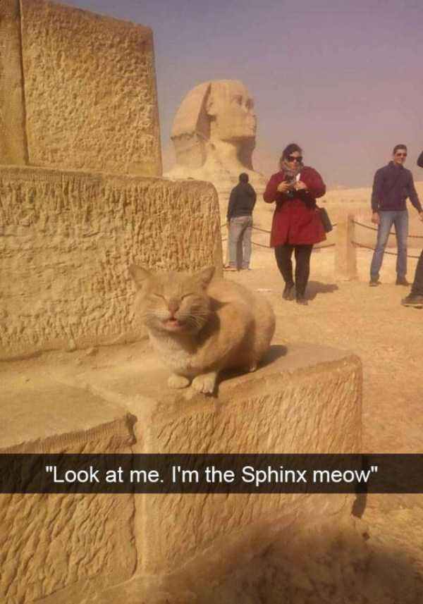 hilarious-cat-snapchats (12)