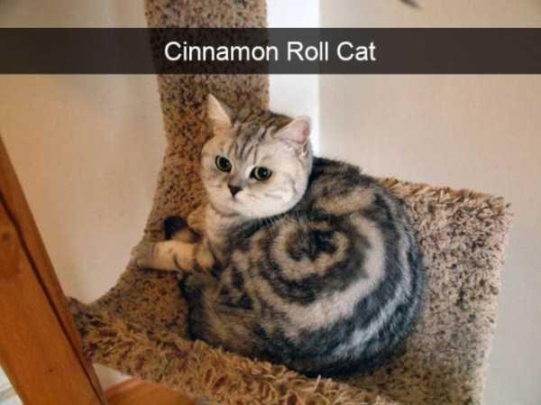 hilarious-cat-snapchats (14)