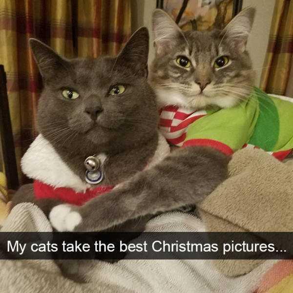 hilarious-cat-snapchats (16)