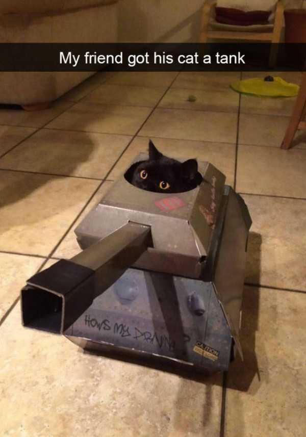 hilarious-cat-snapchats (18)
