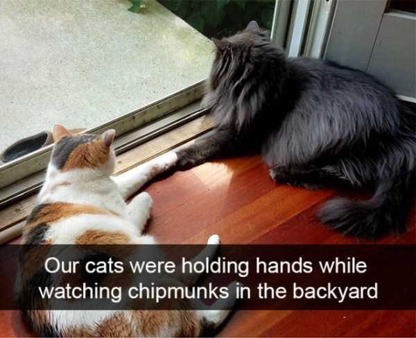 hilarious-cat-snapchats (19)