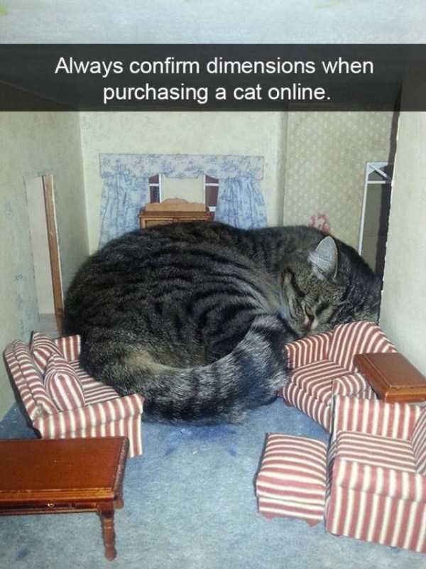 hilarious-cat-snapchats (2)