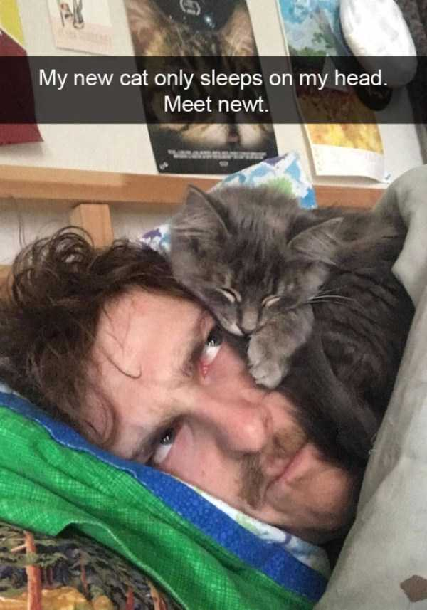 hilarious-cat-snapchats (21)