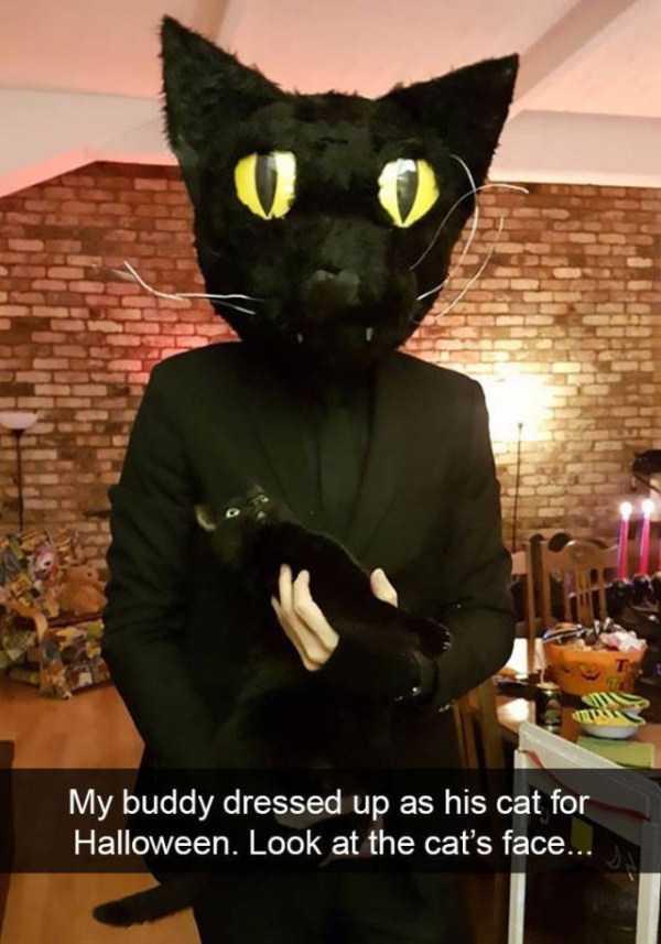 hilarious-cat-snapchats (22)