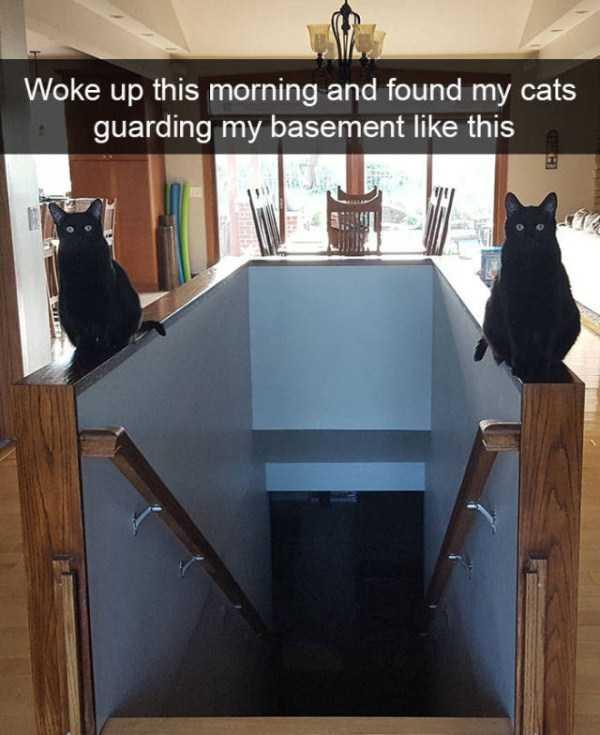 hilarious-cat-snapchats (23)