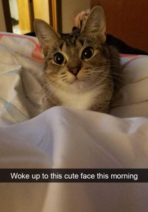 hilarious-cat-snapchats (24)