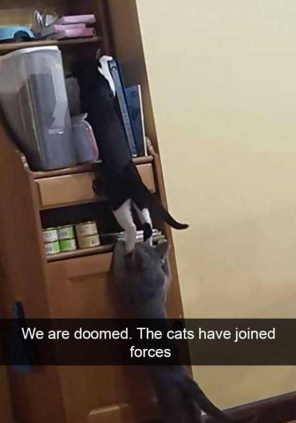 hilarious-cat-snapchats (25)