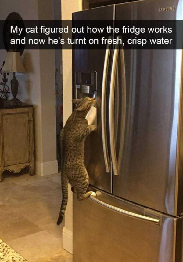 hilarious-cat-snapchats (26)