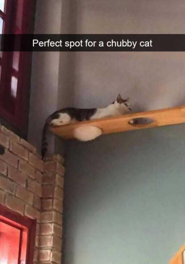 hilarious-cat-snapchats (27)