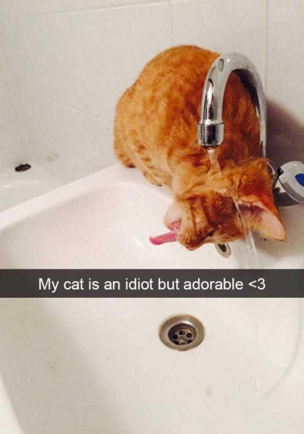 hilarious-cat-snapchats (28)