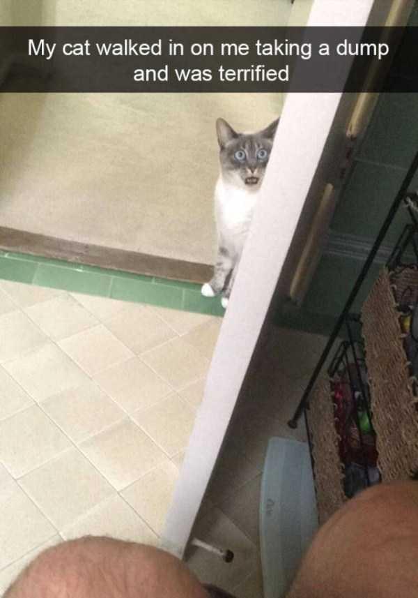 hilarious-cat-snapchats (29)