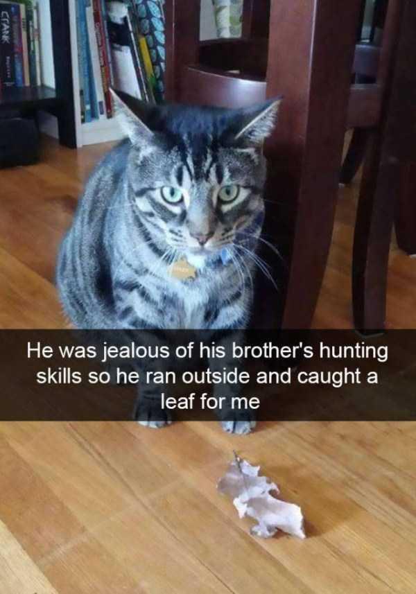 hilarious-cat-snapchats (3)