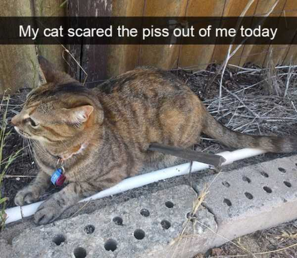 hilarious-cat-snapchats (30)