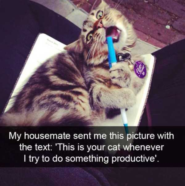 hilarious-cat-snapchats (32)