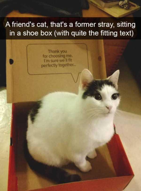 hilarious-cat-snapchats (34)