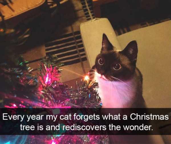 hilarious-cat-snapchats (35)