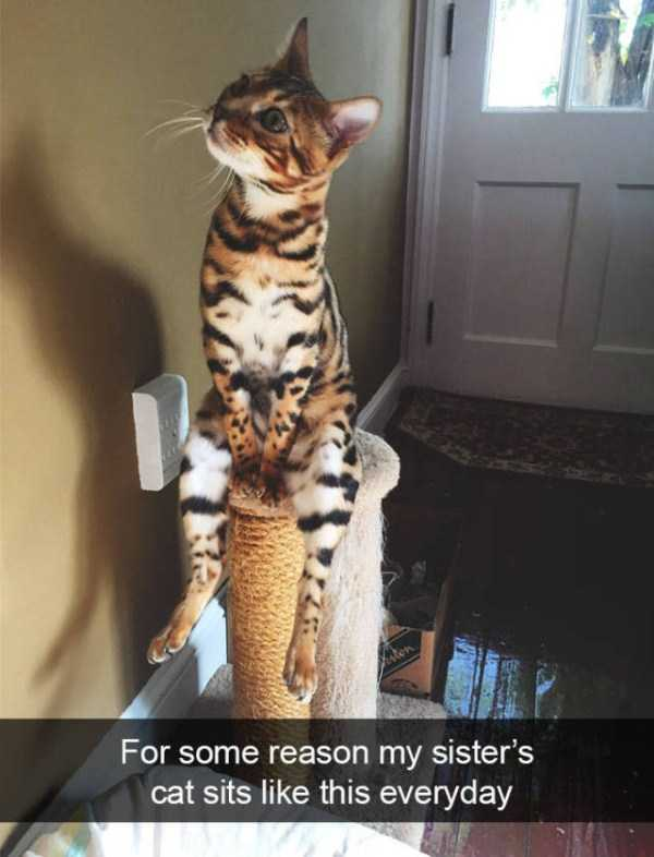 hilarious-cat-snapchats (36)