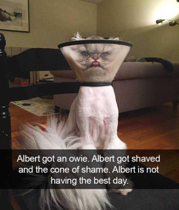 hilarious-cat-snapchats (39)