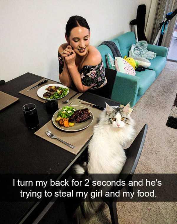 hilarious-cat-snapchats (41)
