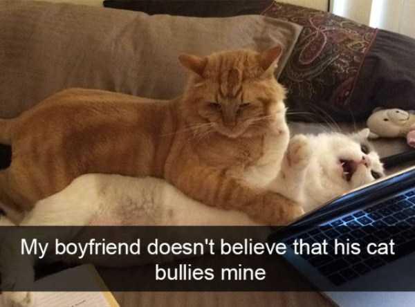 hilarious-cat-snapchats (43)