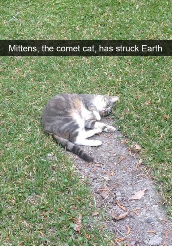 hilarious-cat-snapchats (44)