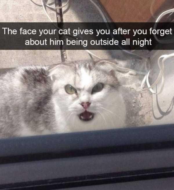 hilarious-cat-snapchats (45)